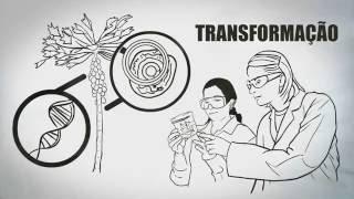 ALIMENTOS TRANSGÊNICOS: Como são feitos e o que são
