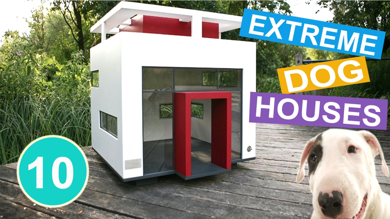 Unique Dog Houses