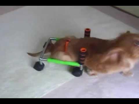 犬 用 車椅子 自作