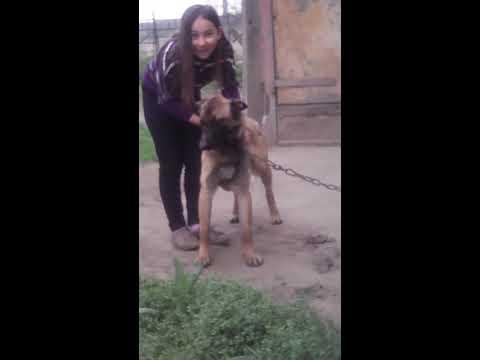 Elképesztő mit csinál a kutyával 😙😚😀😮😮😮😮😨😨😱😱😱😱😱 letöltés