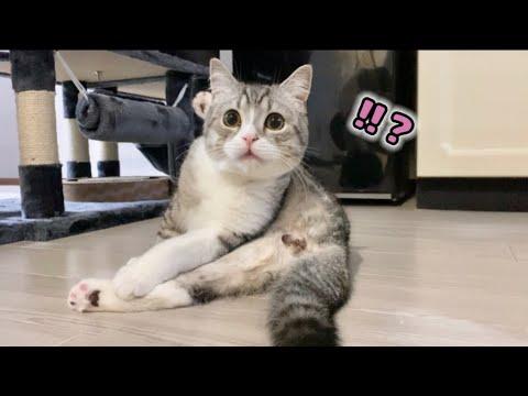 去勢でタマタマが無くなったと気付いたもち猫の反応がこちらです…