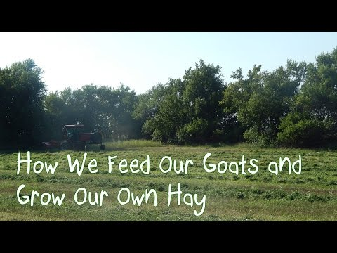 How We Feed Our Goats and Grow Our Own Hay