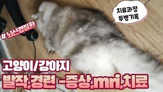 고양이 발작,간질,경련 / 동물병원mri,원인,치료과정…