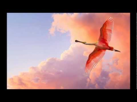 The Cinematic Orchestra - Life Of The Bird