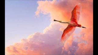 Repeat youtube video The Cinematic Orchestra - Life Of The Bird