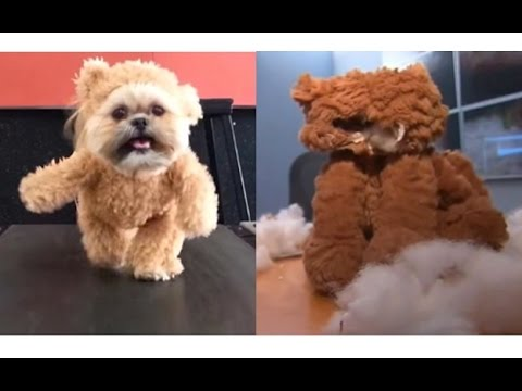 Munchkin the shih tzu teddy bear cnns graphic stuffed animal munchkin the shih tzu teddy bear cnns graphic stuffed animal abuse solutioingenieria Image collections
