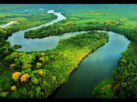 Caracter sticas de los peces del rio amazonas tvagro por for Manual de peces ornamentales