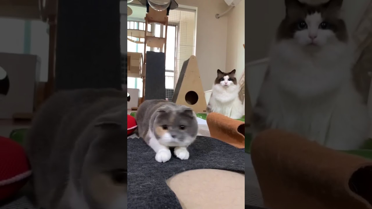 장화신은 고양이