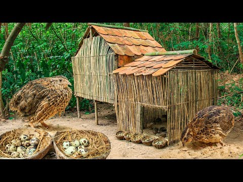 Rescue Quick Bird And Build Beautiful Mini Bamboo House In Forest