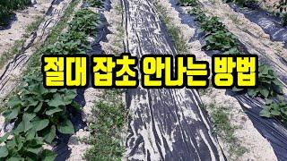 잡초매트, 농업용부직포 쉽고 완벽하게 까는 방법, 잡초…