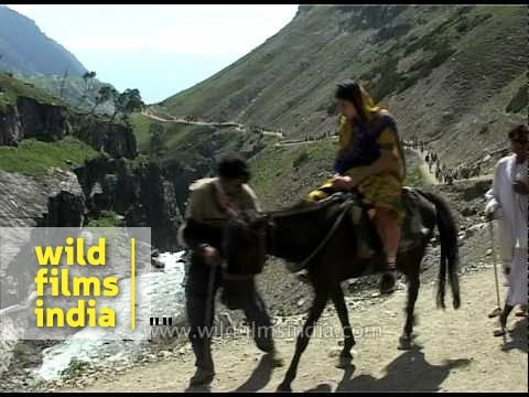 Pilgrims travel by foot, ride ponies to reach Amarnath holy cave
