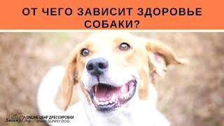 Здоровье собаки.  От чего зависит здоровье собаки если она живет дома или на улице