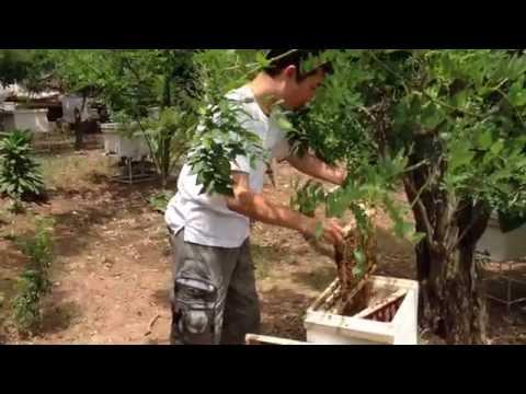 Nuôi ong lấy mật; Kỹ thuật nuôi ong mật; Trang trại ong mật.