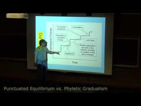 Punctuated Equilibrium vs. Phyletic Gradualism (short version)
