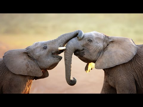 Breaking news: New York State bans elephant acts in circuses