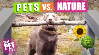 Pets vs. Nature 🌳🌝 | Funny Animal Compilation