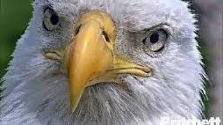 Repeat youtube video Southwest Florida Eagle Cam
