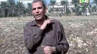 اصناف القمح ومايجب زراعته والحديث عن نوع مصر1