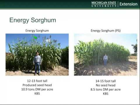 Bioenergy Crops for Michigan and the Upper Midwest