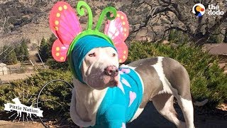 This Pittie Puppy Was Completely Transformed By Love | The Dodo Pittie Nation
