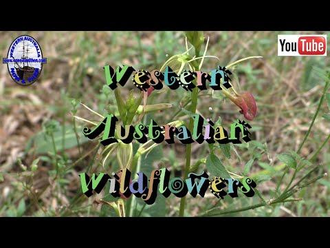Western Australian Wildflowers - T