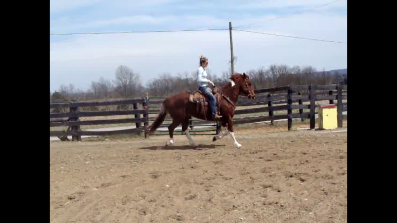 BIG PRETTY SORREL & WHITE PAINT GELDING, USED FOR RANCH WORK IN SOUTH  DAKOTA, BROKE FOR ANYONE, ROPE