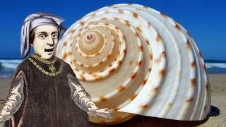 Educational - Fibonacci - Math in the World Around Us