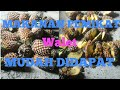 Makanan Pemikat Walet Paling Disukai Walet Praktis Murah Dan Mudah Didapat  Mp3 - Mp4 Download