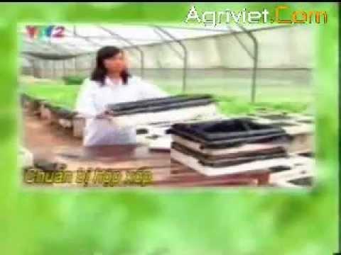 Kỹ thuật trồng rau sạch an toàn - Trồng rau thủy canh - Phần 2