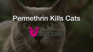Перметрин убивает кошек / Permethrin kills cats