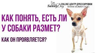 Как понять, есть ли у собаки размёт? Что такое размёт у щенка, как он проявляется?