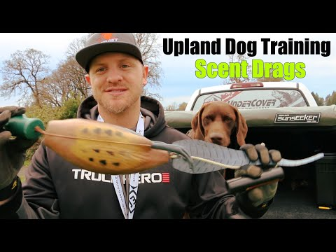 Upland Bird Dog Training | Scent Drags