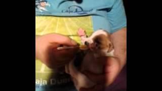 ALUCINANTE:Cachorro comiendo su primer potito.