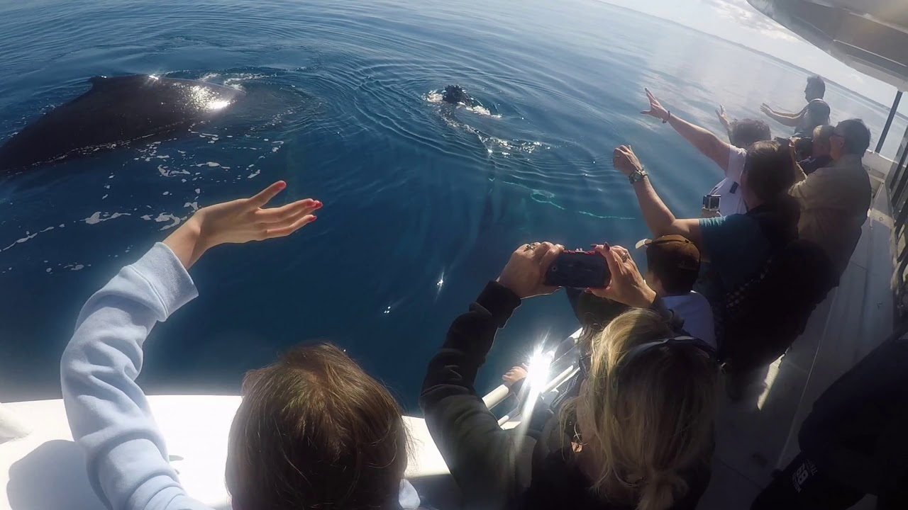 video Whale Watch Tour + Lunch