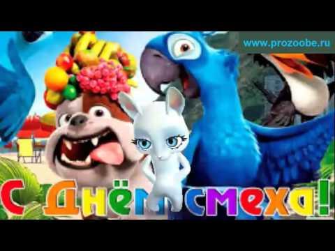 Поздравление на день смеха 1 апреля ❋❋❋ Без юмора жизнь трудна ❋❋❋ Поздравления от Зайки - Видео приколы смотреть