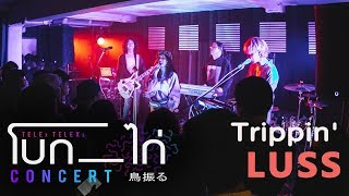 luss-trippin-live-at-telex-telexs-โบก-ไก่-concert