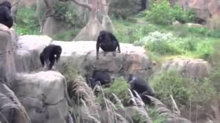 Приколы с животными видео с енотом  Ищу во мху енота Где же мой енот  Вот во мху енот!  Камеди клаб4