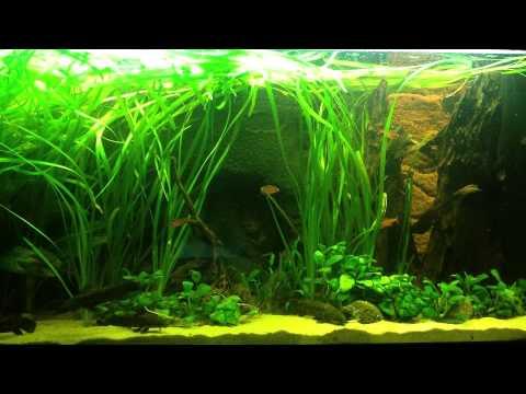 nice aquarium 120 cm