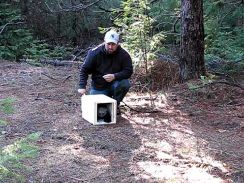 Pacific Fisher Translocation Release