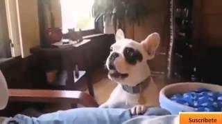 Videos graciosos 2014   Videos de risa de animales chistosos   Perros, gatos y mas! cEPCzUQs2aM