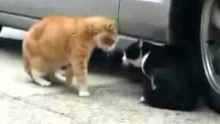 Kłótnia kotów - serki wiejskie z PoloMarketu