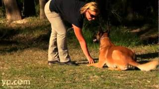 San Antonio Tx Pet Obedience A Better Dog Training