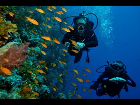 Scuba Diving Sharm El Sheikh 2015