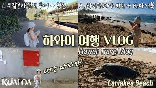 하와이 여행 중 바다거북을 보려면 일단 라니아케아 비치…
