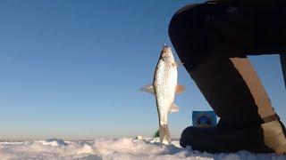Чудо озеро Шарташ Рыба клюет