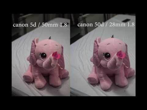 Canon 5d mark 1 vs canon 50d image quality