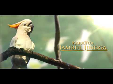 Lagu anak Burung kakak tua (gambar+lirik)