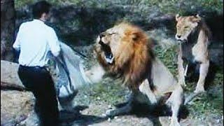 Нападение животных на людей. Подборка 2016 / Уникальные кадры