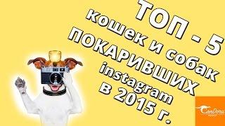 Звёзды Instagram 2015:  коты и собаки!