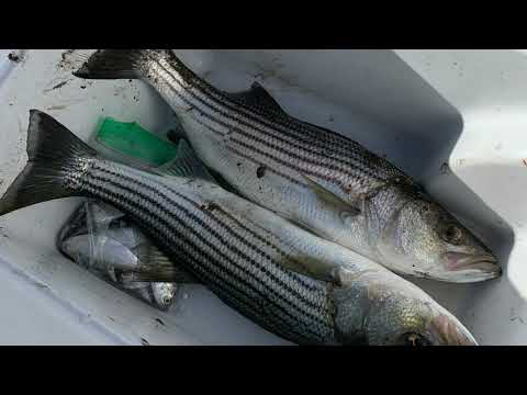 Stockton, California Striper Fishing